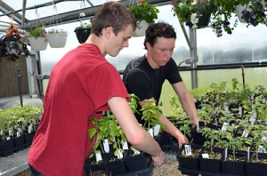 PLHS juniors Casey Keane and Thomas Roberts organize plants for the annual sale.