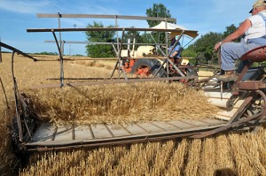 Wheat Harvest began June 5 for members of the Meriden Antique Engine and Threshers Association who took their 80-year-old binder to the field.