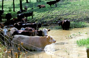 Failure to get enough water will reduce animal performance more quickly and more severely than any other nutrient deficiency.