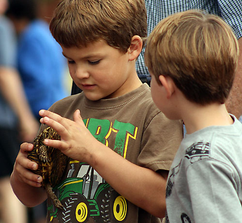 Colsen Perry, 5, left, and Wyatt Shay, 5, examine Perry's turtle after the turtle races.