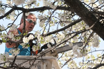 Barry Wells of B&B Tree Removal