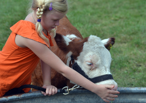 Jacenda Schnacker, 9, waters her bucket calf. She is from Meriden and a member of Clover Power. Her parents are Daniel and Joline Schnacker.
